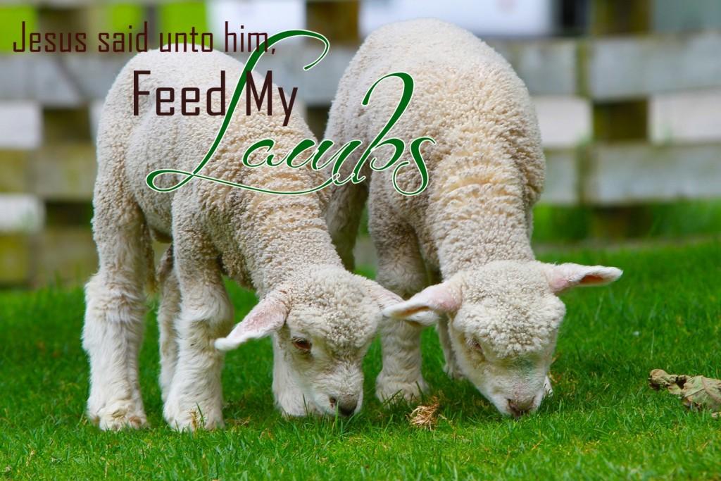 Feed My Lambs jpg